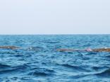 韓国からの漂着物6マイル以上 まだ先まで シイラが入れ食い