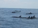 イルカの大群で釣果悪し