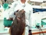 ヒラメ6.4kg