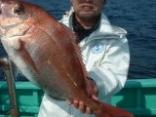 真鯛 5.2kg