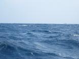 今日は時化模様 北風12m波の高さ1.2m