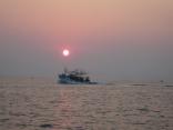 今日も日の出と共にイカ釣り船が帰港