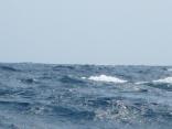 波の高さ2.0m 段々時化てきました