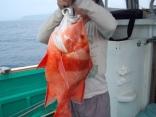 千年に一度 釣れると云う 稀少魚「千年鯛」です。友人の「ほうせい」君が釣りました