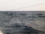いい天気だったのに 北風9m吹いてきました 13mになり帰港へ