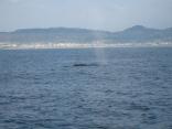 クジラ!!