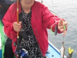 カレイ釣り