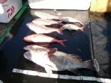 10月4日 ついでの釣りでの釣友の釣果です。