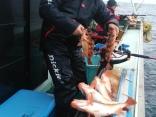 メバル釣り2015#06