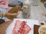 愛犬とマグロのなかおち!おいしいかい?