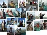 県北で釣れる魚達