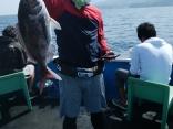 釣果5月27日午前便 マダイ60センチ