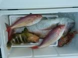 萩沖で釣りました。