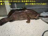 ■7/16(火)東京都平村さんが ●アラ16kg を上げました。