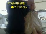 ■7/8(月)初挑戦でグンジさんの釣果は ●アラ18.5kg 上げ