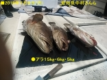 ■7/8(月)●アラ15kg・6kg・5kg