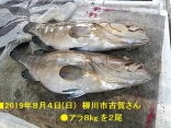■8/4(日)柳川市古賀さんは ●アラ8kg を2尾