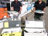 6月2日午前便、ヒラマサ18本、真鯛40センチ2枚、ホウボウ1匹、カサゴ1匹でし