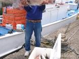 6月3日午前便、ヒラマサ3本、真鯛40~70センチ6枚、ウマズラ大1枚でした
