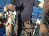 沖サワラ 90cm