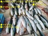 ■11/15(日)●ブリ5kg・4kgを61尾合計67尾の爆釣