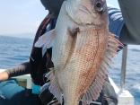 船釣り初挑戦でレンタルタックルを上手に使いこなしてゲット!