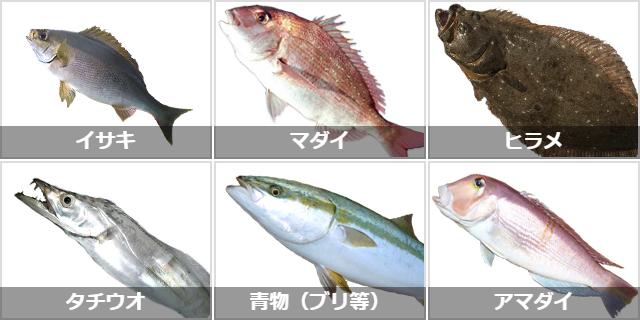 中型魚の釣りターゲット