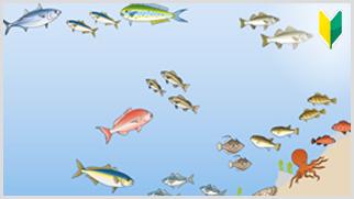 船釣りで狙える魚たち