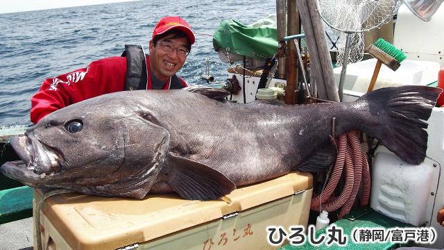 アブラボウズ 80kg