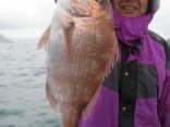 真鯛54cm