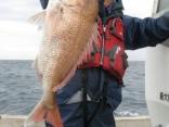 真鯛79cm・5.6kg