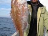 真鯛71cm