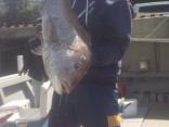 マダイ8.4kgを頭に12尾
