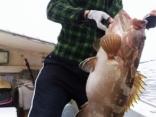 佐賀の大さんの釣果:アラ 10kg 1尾