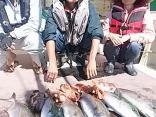 佐賀県 藤井さん他2名の釣果はカンパチ3kg~2.5kgを4尾とヤズ