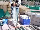 佐賀県大川町 江頭さん他5名の釣果です。ヒラマサ13.2kgを1尾