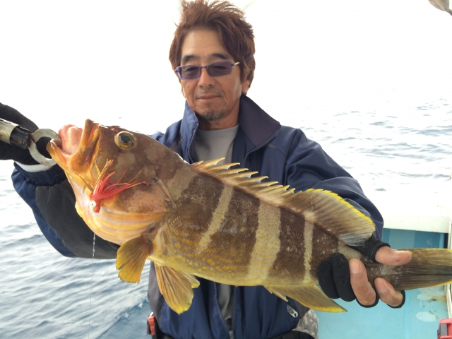 アオハタ|魚図鑑|つりー