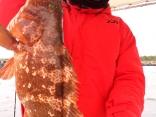 キジハタ 55cm 3.4キロ
