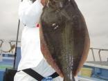 ヒラメ 8.7kg