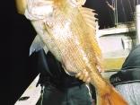 スッテに真鯛85cm