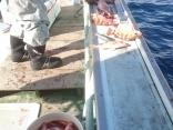メバル釣り20161120#02