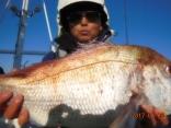 大鯛 4.5kg