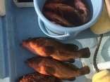 根魚は結構釣れます