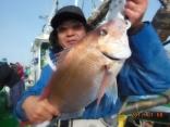 中鯛 3.5kg