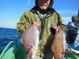 真鯛 1.5k  1.3kg