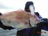 真鯛 1.7kg