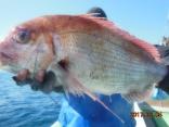 中鯛 3.8kg