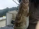 熊本県 宮川さん●アラ 13kgを1尾