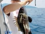 高級魚イシナギ