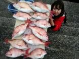 写真の女性、貸竿にて挑戦され11枚釣り上げ成功!